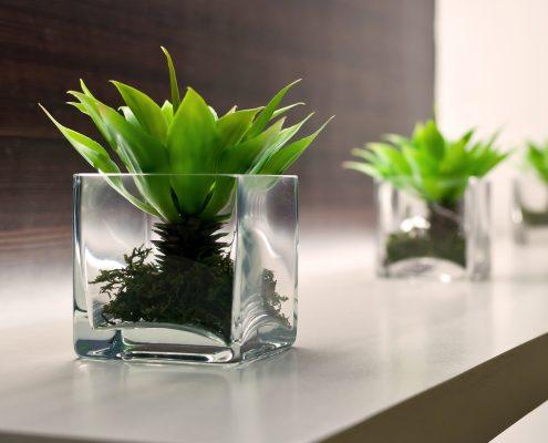 Einzelbüro Beispielbild Pflanze